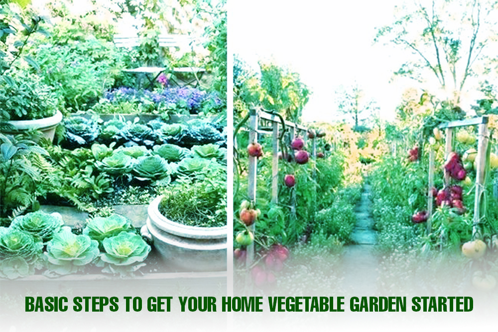 Basic Steps To Get Your Home Vegetable Garden Started | Sri rama nursery