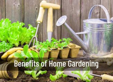 Benefits of Home Gardening   Home Gardening   Srirama Nursery