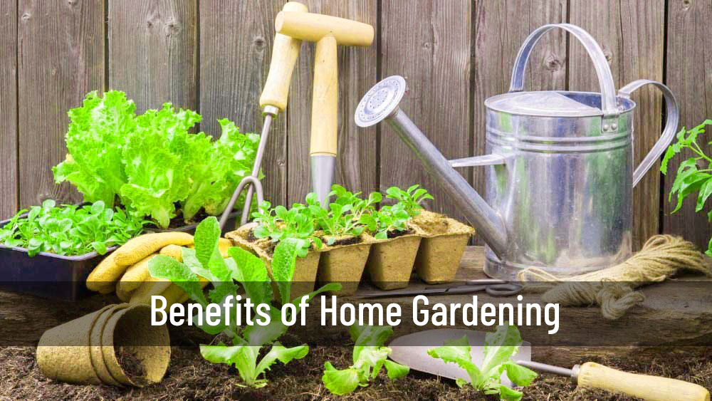 Benefits of Home Gardening | Home Gardening | Srirama Nursery